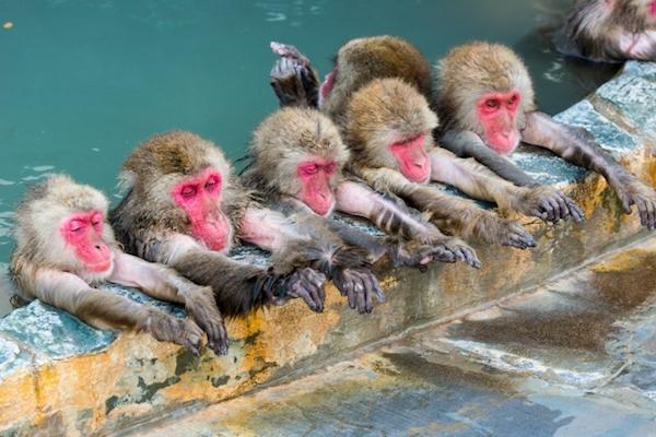 猿 温泉 浴槽