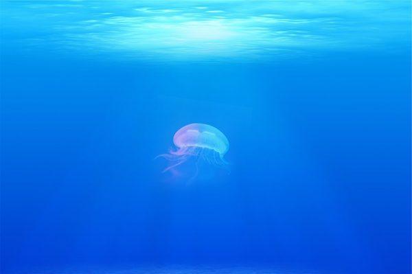 水に浮かぶクラゲ